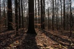 Der Spessartwald